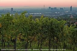 Weinkultur: Weingarten in Wie
